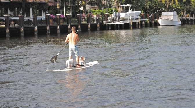 When do Dogs need Life Jackets?