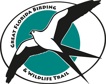 Great Florida Birding & Wildlife Trail post Irma Updates