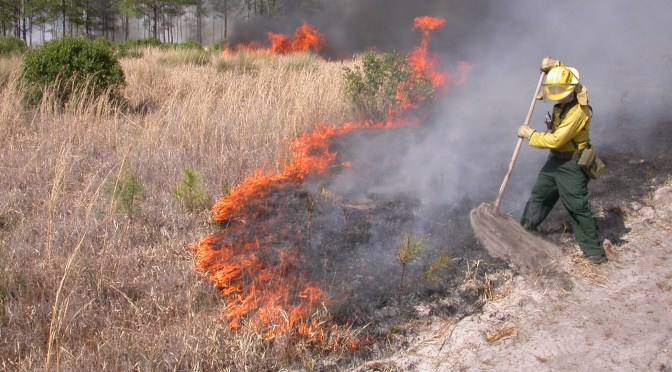 SWFWMD Schedules Prescribed Burns for the Nature Coast
