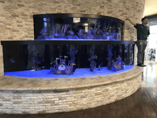 Huge saltwater tank was featured on television.
