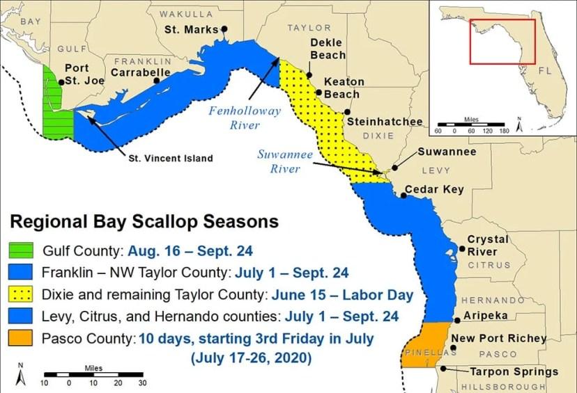 bay scallop season fwc regularion