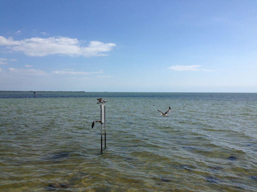 gulls at pine island