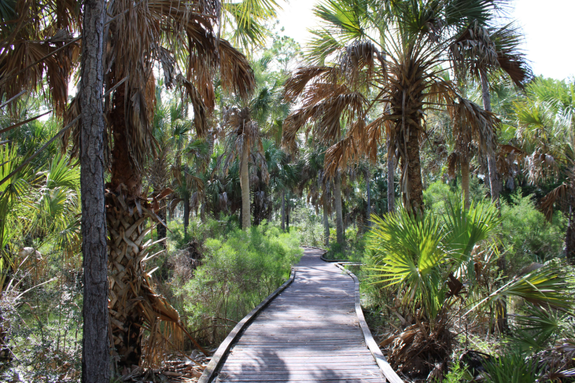 The withlacoochee gulf preserve salt marsh boardwalk
