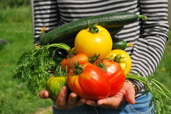 Harvest healthy new habits and food this growing season. The UF/IFAS Pasco County Extension Community Garden Program is now leasing FREE garden plots to Pasco residents.