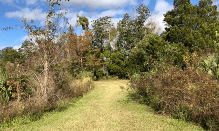 The Wetlands Trail at Crystal River National Wildlife Refuge