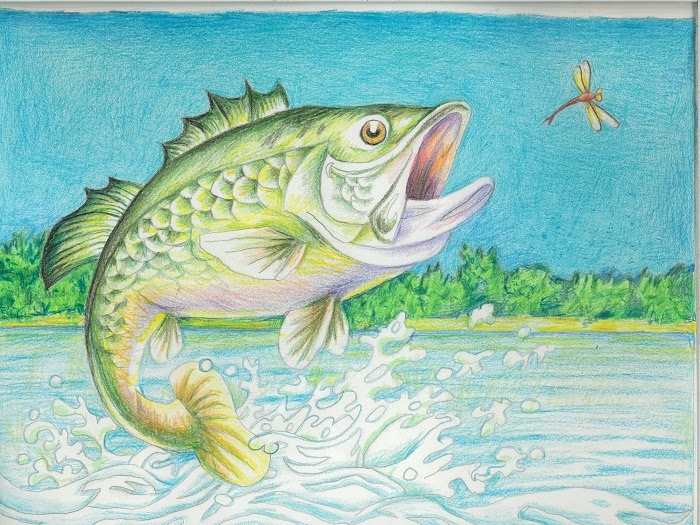 The deadline is fast approaching for the 2021 Art of Conservation™ Florida Fish Art Contest, hosted by the Florida Fish and Wildlife Conservation Commission (FWC).
