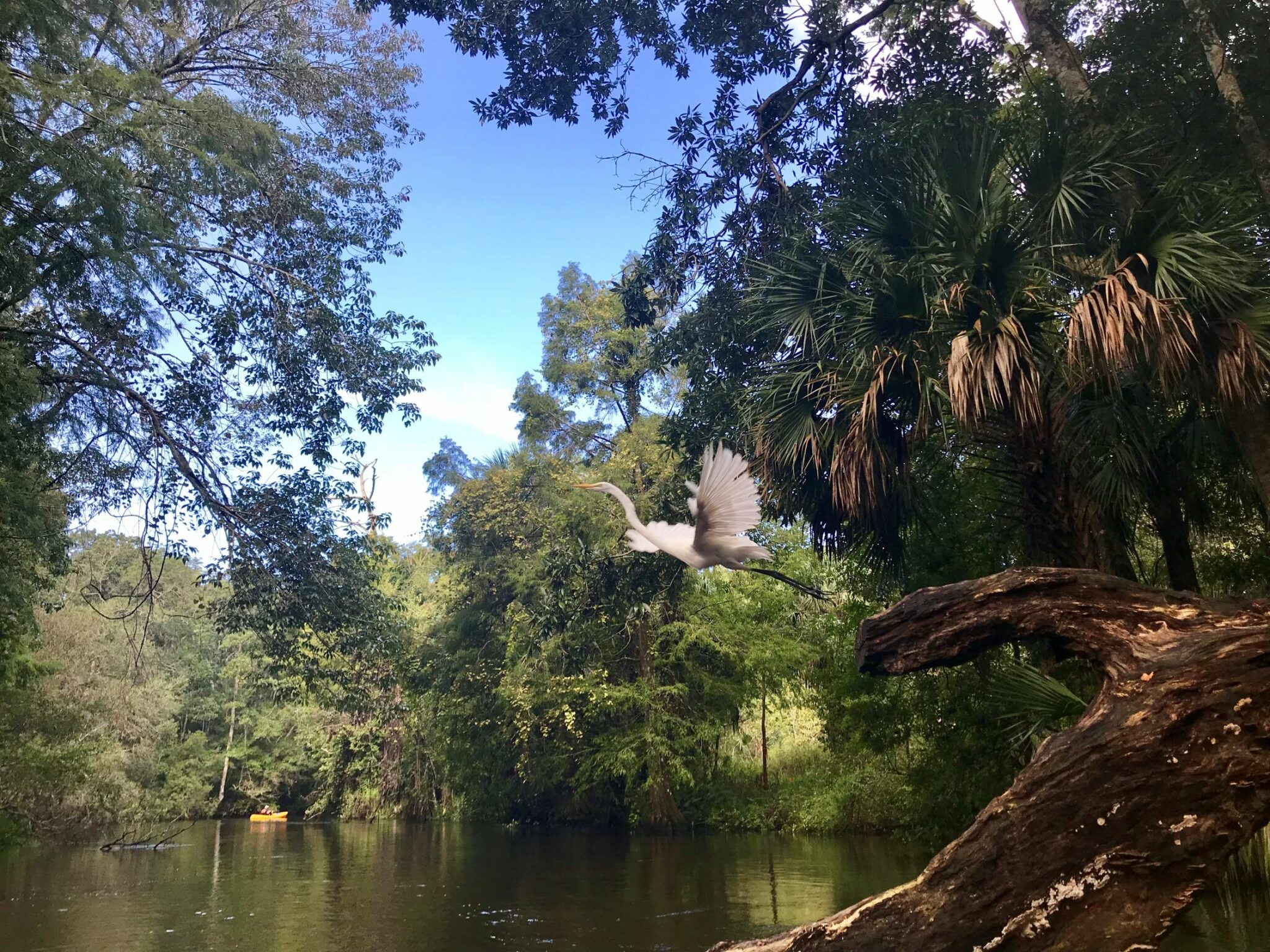 crane on the weeki wachee river