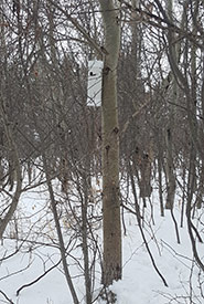 Location of nest tube #1 (Photo by Sarah Ludlow/NCC staff)
