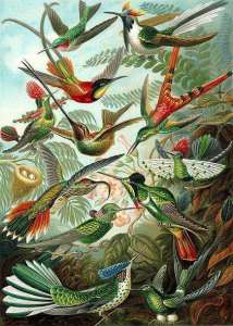 Les colibris et le nectar nyctamère.pdf - Adobe Reader