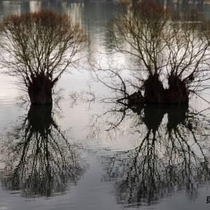 France-Aube-Lac de la forêt d'Orient