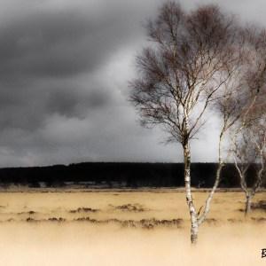 Pays Bas-Parc national De Hoge Veluwe