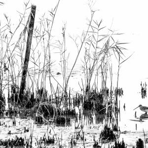 Bécassine des marais-France-Marne