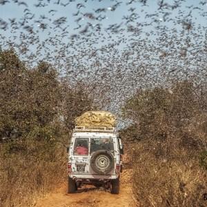 Nuage de criquets-Madagascar
