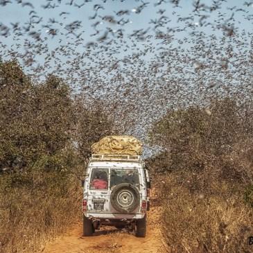 Publication de nouvelles photos de Madagascar