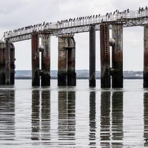 Grands Cormorans-Pas de Calais-Port de Boulogne