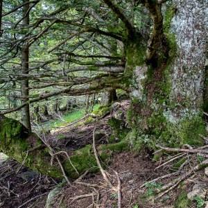 Chêne-France-Cantal