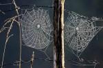 Les toiles d'araignée dans la rosée du matin