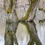 En hiver, partez à la découverte des écorces des arbres, des mousses et lichens qui les recouvrent. C'est également le moment d'observer les troncs d'arbres aux formes curieuses !