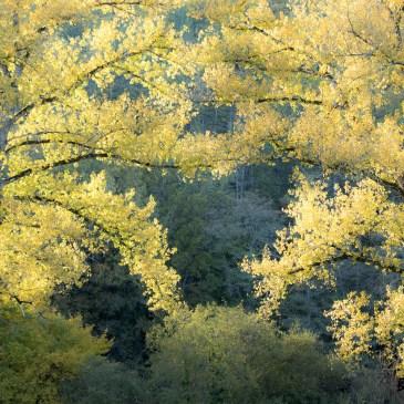 Avis à tous les amateurs des forêts : les arbres commencent à prendre leurs belles couleurs automnales. Par contre les sous bois restent désespérément secs. Ne comptez pas trop sur les champignons pour garnir l'omelette.