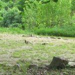 Sylvothérapie : la médecine des arbres