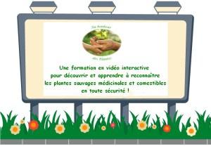 Formation en ligne sur les plantes sauvages médicinales et comestibles