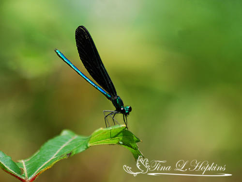 Insects25
