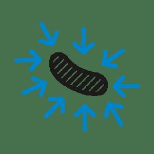 bactérie-sous-pression-hpp