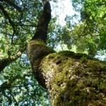 A la rencontre des arbres