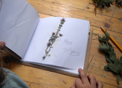 Atelier herbier