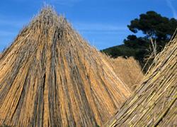 Canne de Provence tipis Carqueiranne