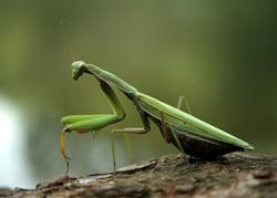 La biodiversité à tous les étages