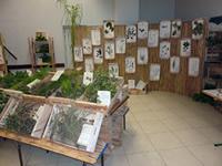 Exposition plantes et usages de plantes