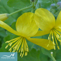 Plantes magiques, plantes qui guérissent