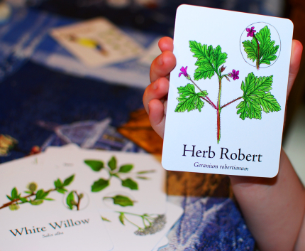 Herb Robert Card on Wildcraft