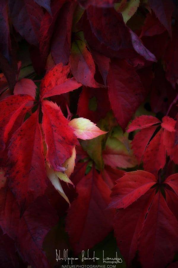 https://i2.wp.com/www.naturephotographie.com/wp-content/uploads/2012/11/DSC_0060OK.jpg
