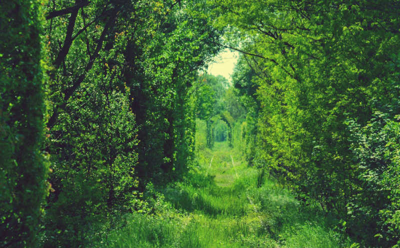 6. Tunnel of Love, Caras Severin