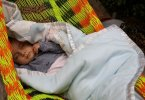Baby sleeping in hammock