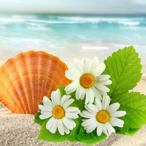 Denise's Favorite Fragrance Oils: Beach Daisies Fragrance Oil