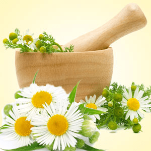 Best Tea Fragrance Oils Chamomile Fragrance Oil