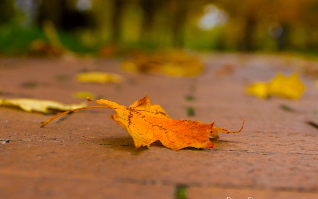 The Golden Gifts of Fall