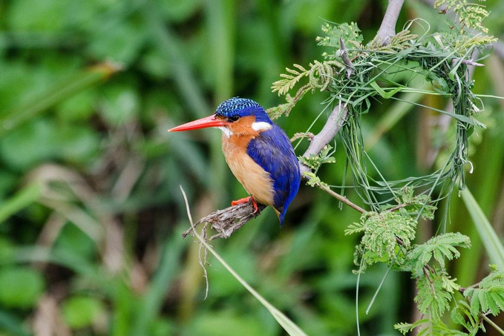 Birding and Bird Watching in Uganda