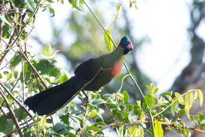 naturetarck-bwindi