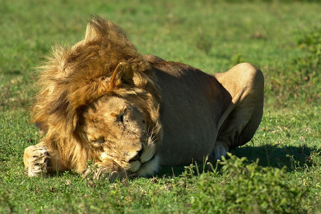 game drive safaris in Uganda
