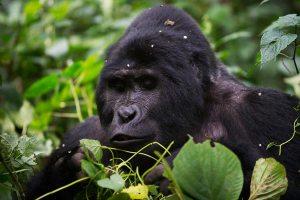 bwindi-impenetrable-forest-naturetarck