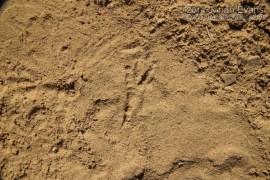 Jay Tracks