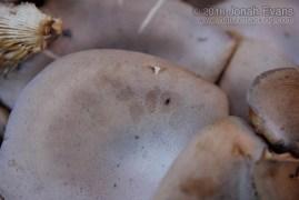 Squirrel Feeding on Mushrooms