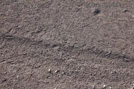 Tumbleweed Marks