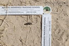 Lizard Scat