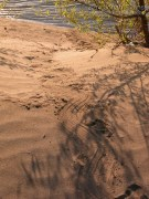Beaver Tail Drag