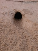 Kangaroo Rat Burrow
